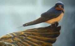 COVID Safe Weekend Trips: The Audubon Bird Sanctuary